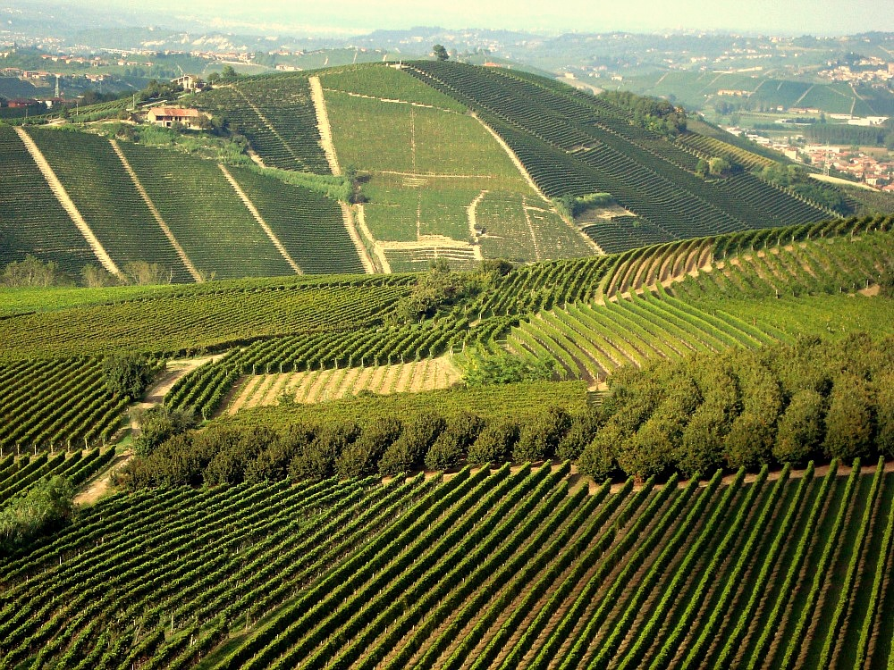Barolo Wine Lands