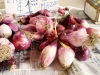 Tropea Red Onions
