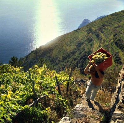 Guided Tour of Cinque Terre