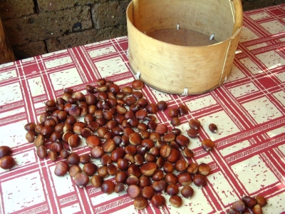 Chestnuts from Montella