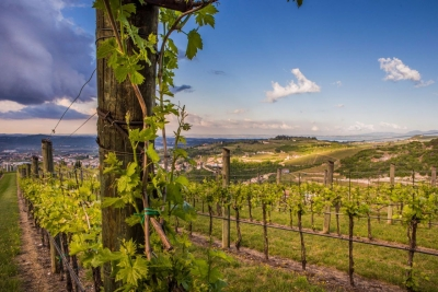 The Territory of Valpolicella