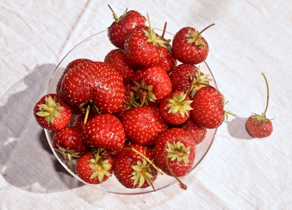 Top 10 Strawberry Festivals in Italy