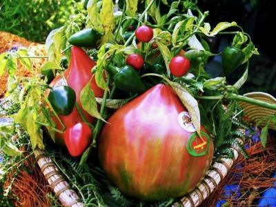 The Pomodoro of Belmonte - Delicious Italy
