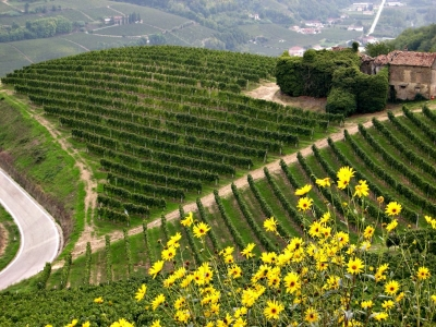 Barbaresco wine tours in Piemonte by Tasting Tours, Asti