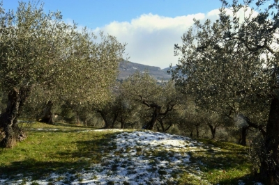 Olive oil pressing in Umbria