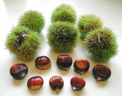 Chestnuts from Melfi
